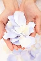 花びらを乗せた手のひらの写真